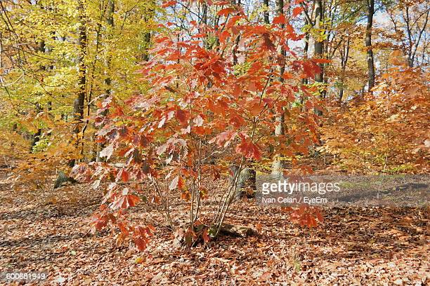 Autumn Trees Growing In Forest