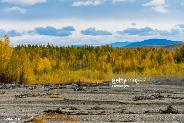 Autumn trees growing in rural landscape,Russia.