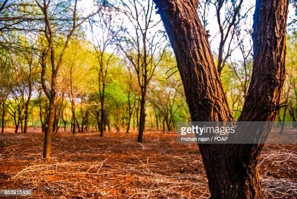 autumn trees in fores - forens stock pictures, royalty-free photos & images