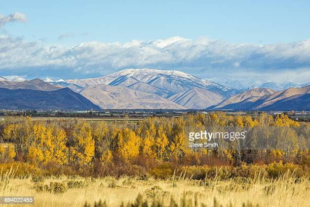 autumn trees in mountain landscape - sun valley idaho stock photos and pictures