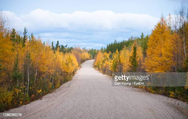autumn trees in northern ontario - wilderness stock pictures, royalty-free photos & images