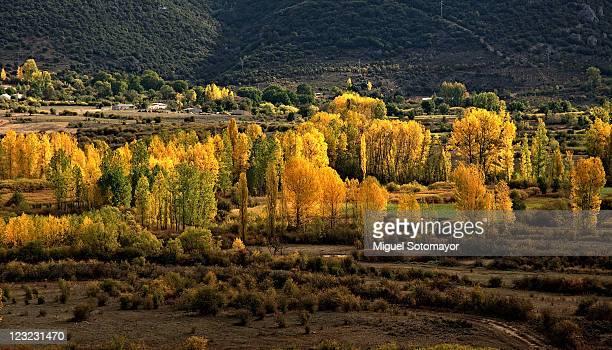 autumn trees in spain - cuenca provincia de cuenca fotografías e imágenes de stock