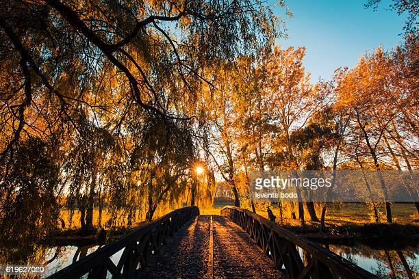 Autumn trees in sunbeams, an autumn landscape. Sunlight and relaxing autumn landscape