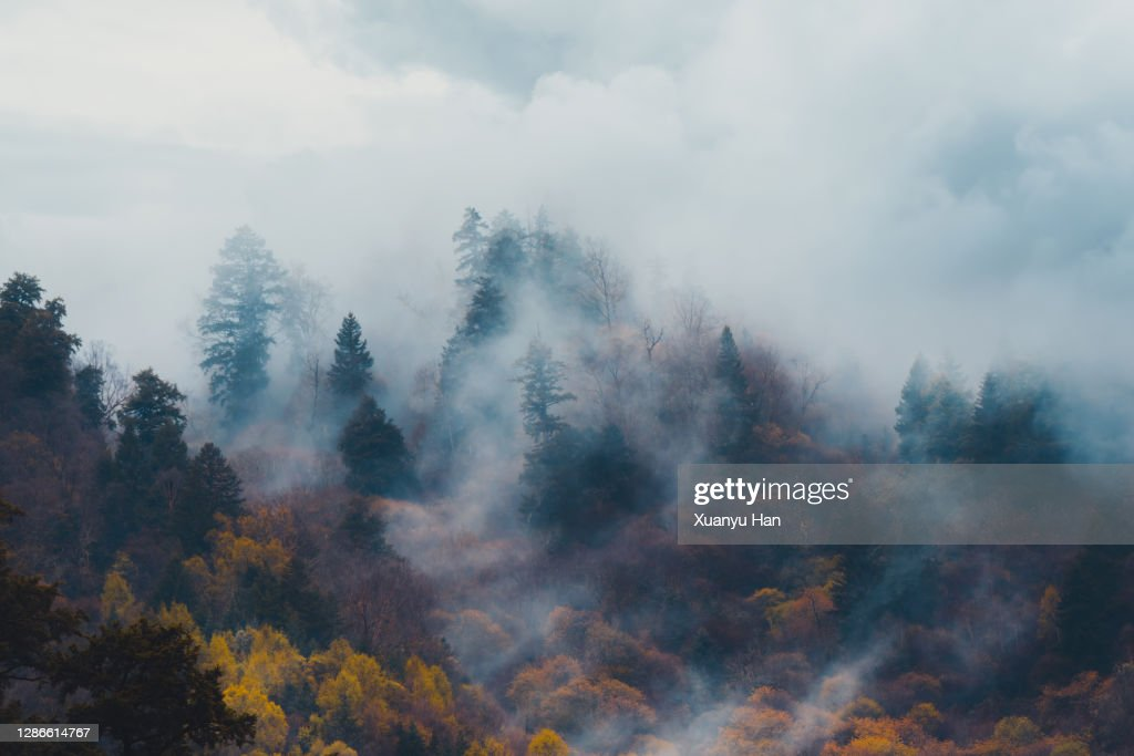 Autumn trees in the misty forest : Stock Photo