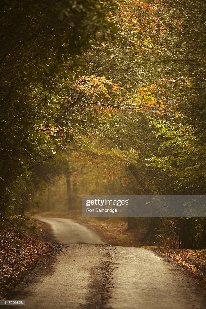 Autumn trees lining rural lane in woods : Stockfoto