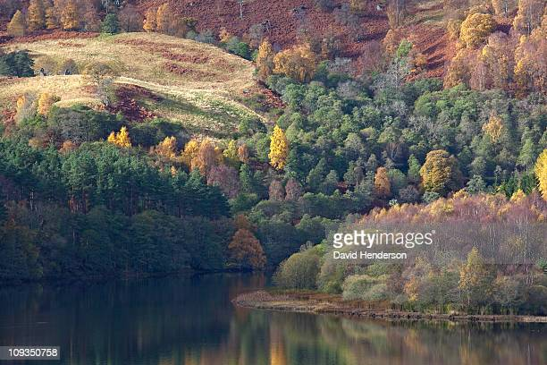 autumn trees on hillside near river tay, aberfeldy, scotland - アバフェルディ ストックフォトと画像
