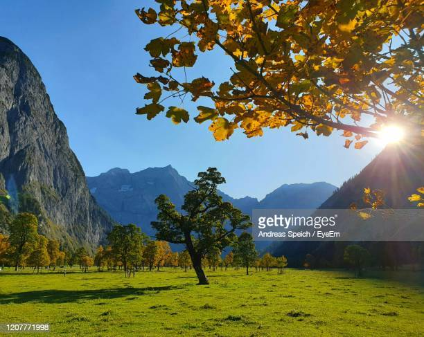 autumn trees on landscape against sky - karwendel mountains stock pictures, royalty-free photos & images