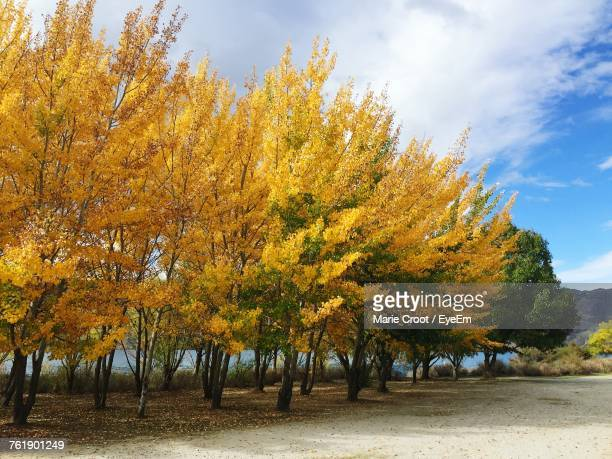 autumn trees on landscape against sky - arrowtown stock pictures, royalty-free photos & images