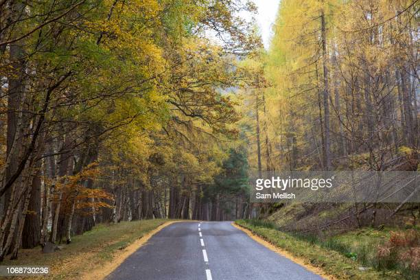Autumn trees on the 5th November 2018 in Ullapool on the west coast of Scotland in the United Kingdom