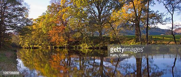 Autumn trees on the bank of the River Earn
