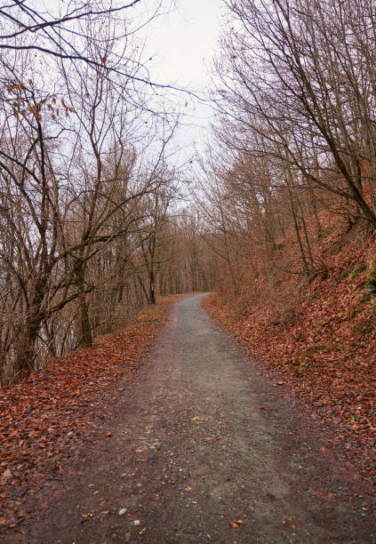 Autumn trees over dirt path in forest mountain.