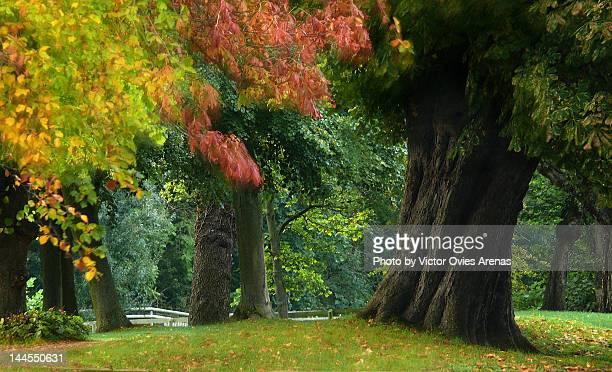 autumn trees - victor ovies fotografías e imágenes de stock