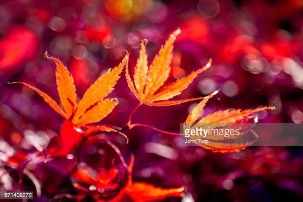 autumn trees - arboreto foto e immagini stock