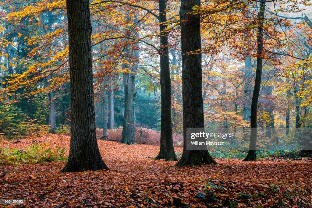 Autumn Trees : Stockfoto