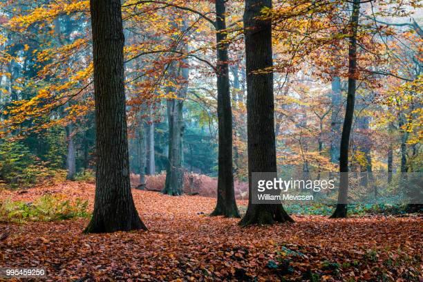 autumn trees - william mevissen stock pictures, royalty-free photos & images