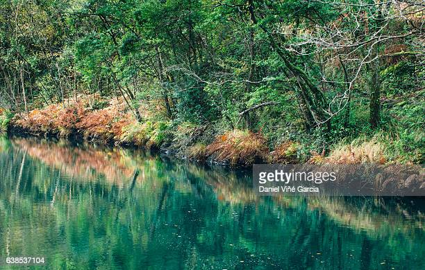 Autumn trees reflected in a river
