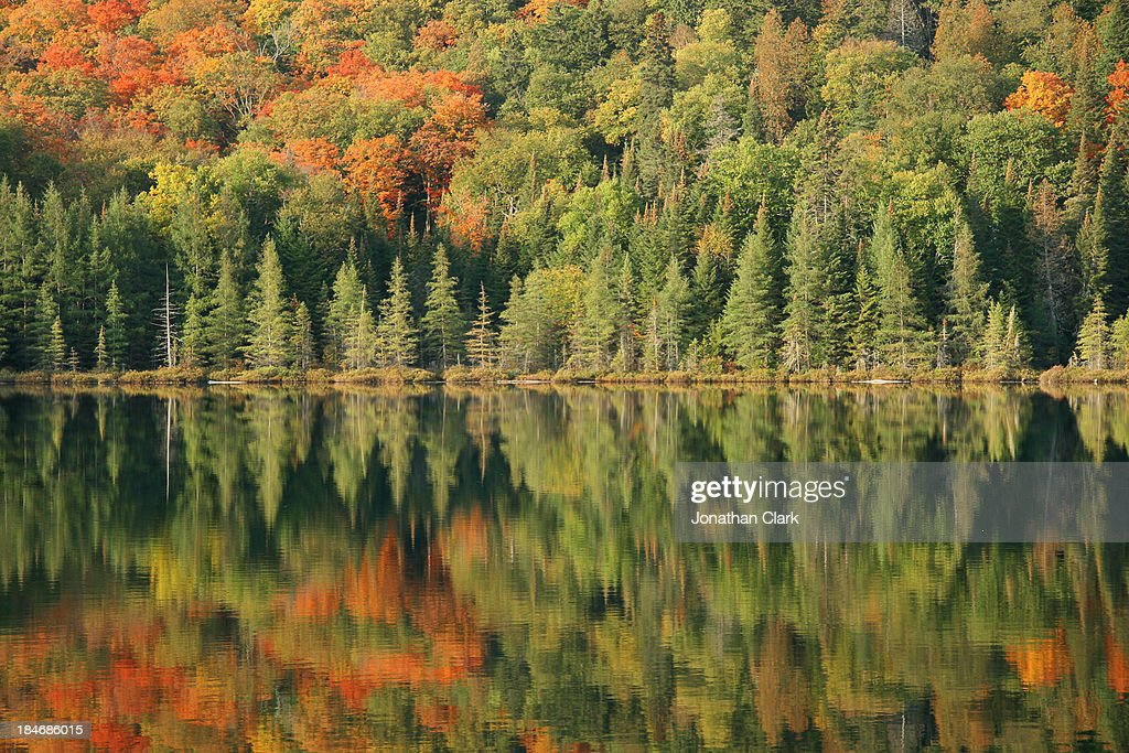 Autumn trees reflecting in a lake : Stock Photo