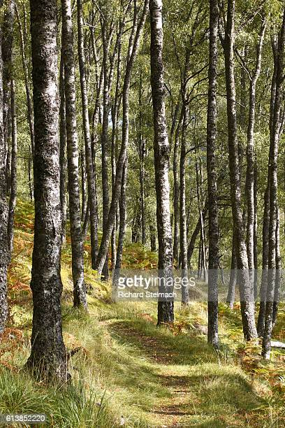 Autumn Trees, Scottish Woodlands, Innerwick, Tay Forest