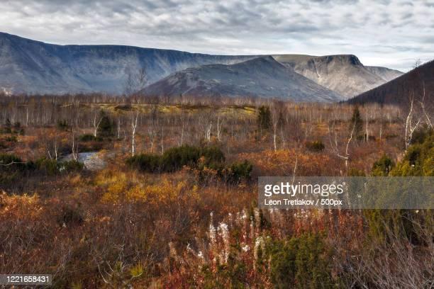 autumn tundra landscape - tundra stock-fotos und bilder