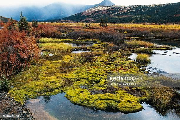 Autumn tundra Mcmillan Pass Mackenzie Mountains Yukon Canada