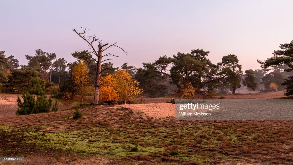 Autumn Twilight : Stockfoto