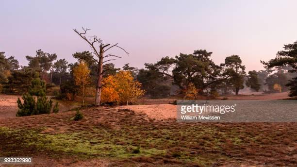 autumn twilight - william mevissen stockfoto's en -beelden