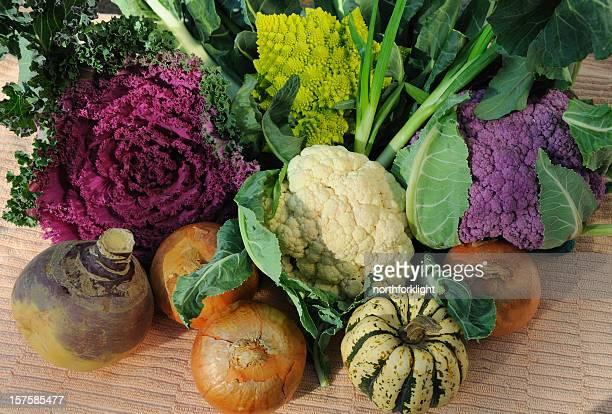 legumes de outono - crucíferas - fotografias e filmes do acervo