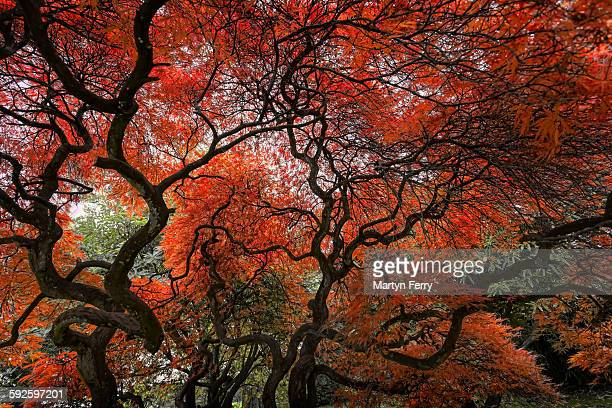 autumn veins - port talbot stock pictures, royalty-free photos & images