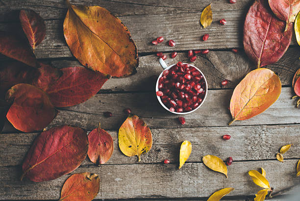 autumn vibs - pomegranate tree stock photos and pictures