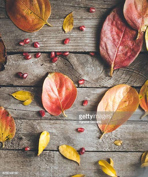 Autumn vibs