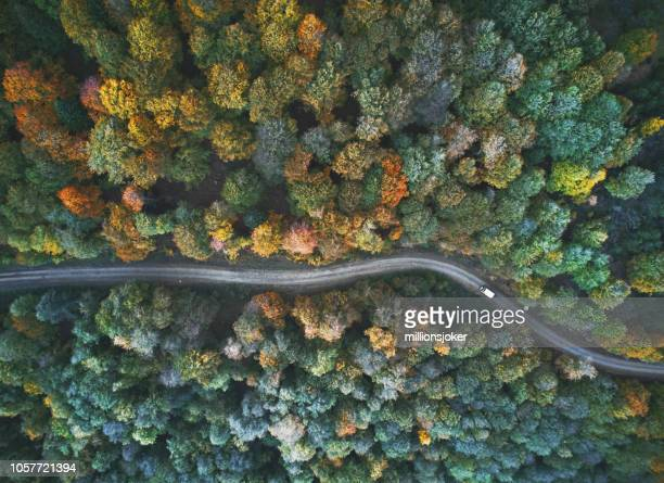 autumn view from above - fall background stock photos and pictures