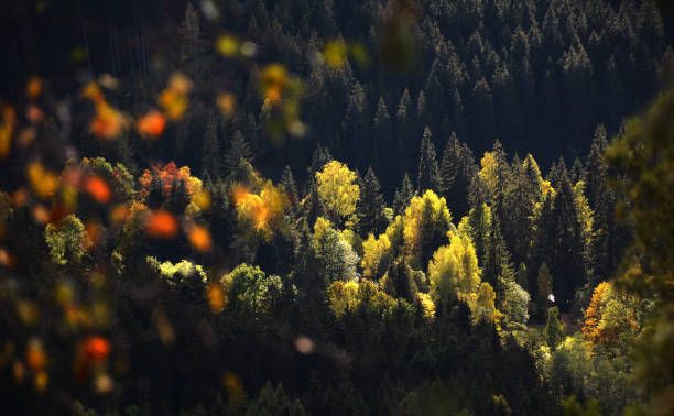 Autumn view of forest