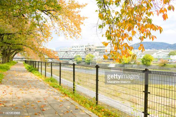 autumn view of kamo river side, kyoto city - 川岸 ストックフォトと画像