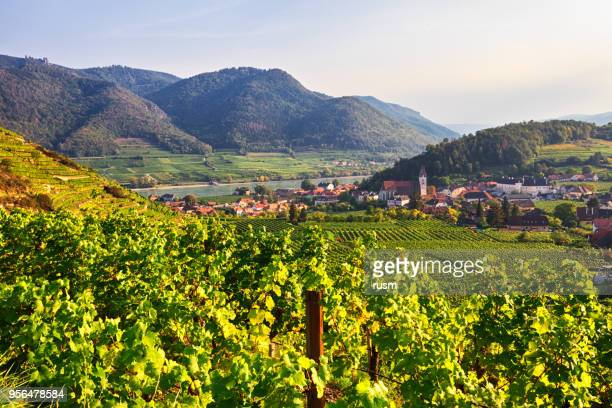 autumn view of vineyards around spitz, wachau valley, austria - austria stock pictures, royalty-free photos & images