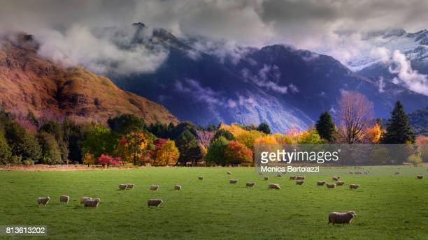 autumn view - arrowtown stock pictures, royalty-free photos & images