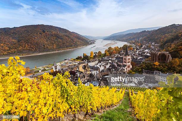 autumn vineyards and river rhine, bacharach, germany - north rhine westphalia stock pictures, royalty-free photos & images