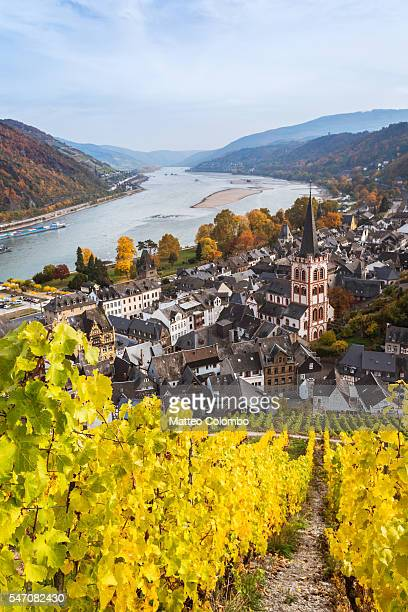 Autumn vineyards and river Rhine, Bacharach, Germany