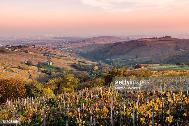 autumn vineyards, beaujolais region, rhone alpes, france - rhone stock pictures, royalty-free photos & images