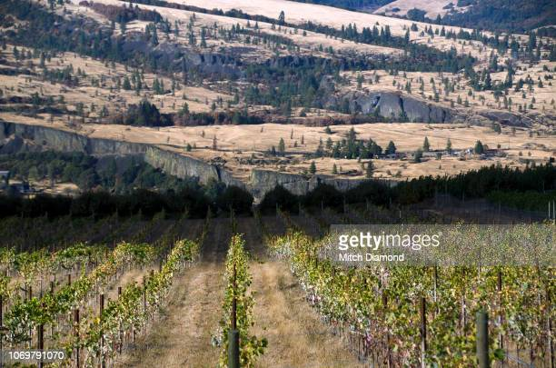 autumn vineyards - hood river stock pictures, royalty-free photos & images