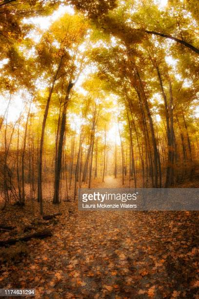 autumn walk in the woods - laura woods stock pictures, royalty-free photos & images