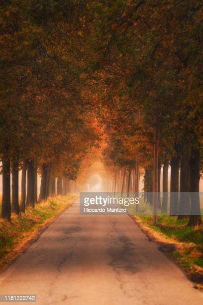 autumn walk - avenue stock pictures, royalty-free photos & images