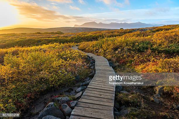 Autumn walkway in Iceland