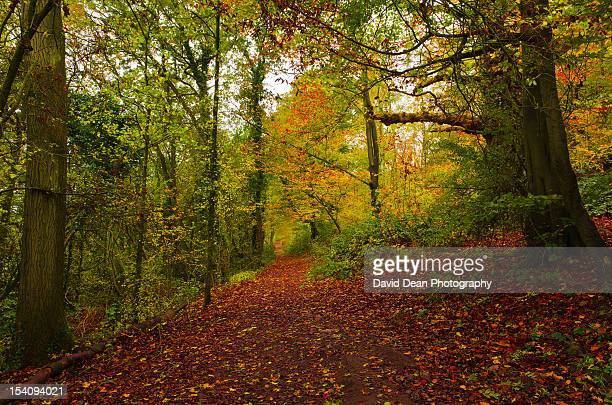 autumn wander - worcestershire stock photos and pictures