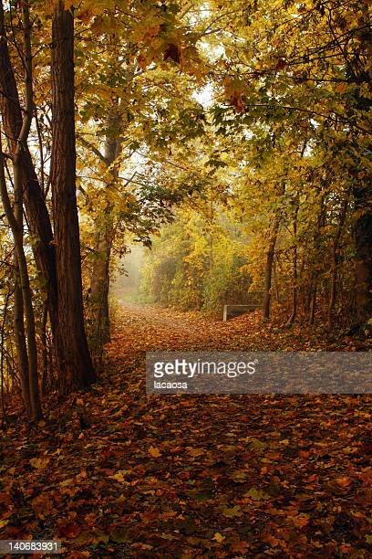 Autumn way in woods