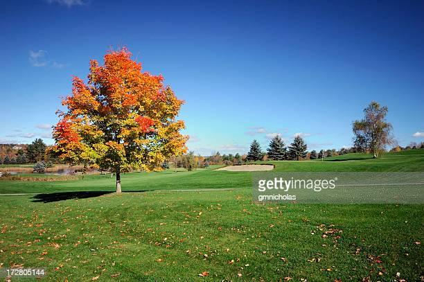 Autumn wide angle