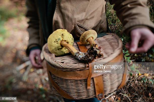 Autumn wild mushroom picking