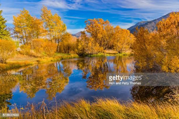 Autumn willow and aspen trees along Mammoth Creek Eastern Sierra Nevada Mountains, CA