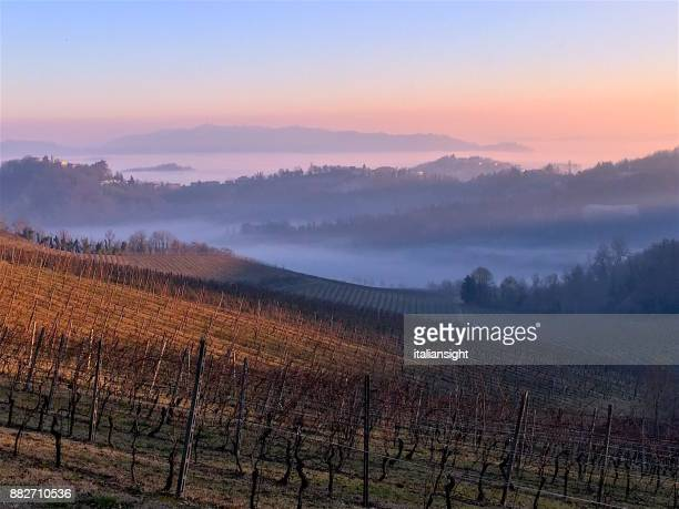 Autumn Winter Panorama Vineyard with Fog in Raising from the Valleys. Monferrato, Piedmont, Italy