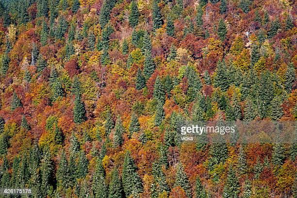 Outono fundo de bosque