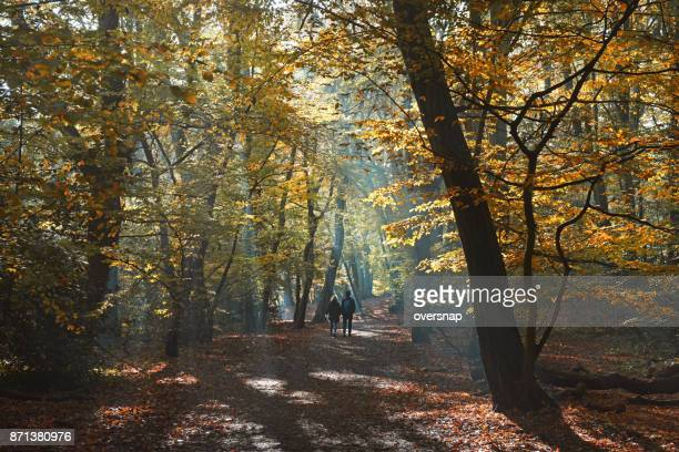 autumn woodland path - highgate stock pictures, royalty-free photos & images